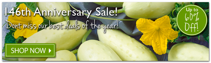 146th Anniversary Sale! Don't Miss our best deals of the year! Up to 60% Off! Shop Now!