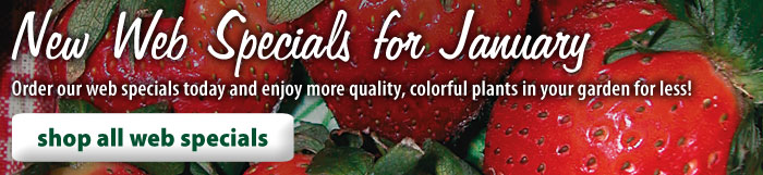 New Web Specials for January! Order our web specials today and enjoy more quality, colorful plants in your garden for less! Shop All Web Specials