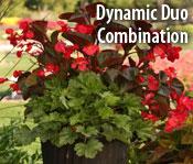 Dyanmic Duo Combination