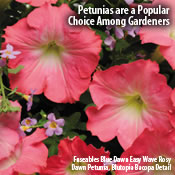 Petunias are a Popular Choice Among Gardeners