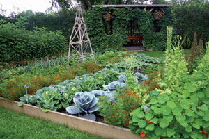 Great Veggies for Beginning Gardeners