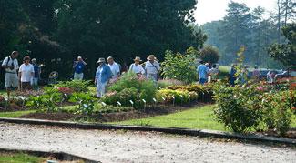 Great Veggies for Beginning Gardeners