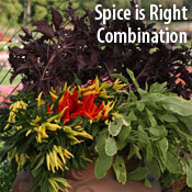Spice is Right Combination