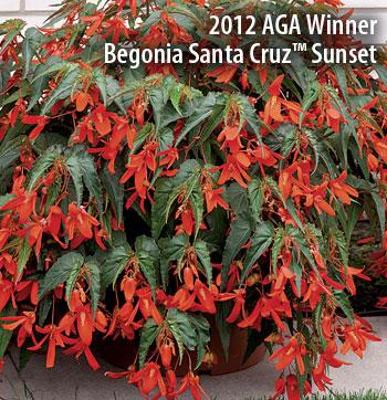 2012 AGA Winner - Santa Cruz Sunset