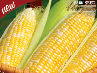 New -- Park Seed Celebrating 145 Years -- Corn Mirai  Bicolor