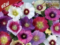 New -- Park Seed Celebrating 145 Years -- Halo Mix Hollyhock