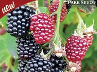hull blackberry wallpaper
